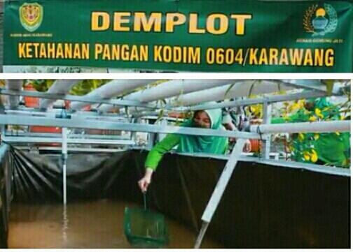 MEMBANGUN KETAHANAN PANGAN PERSIT KARTIKA CANDRA CAB XXXI DANDIM 0604 KARAWANG