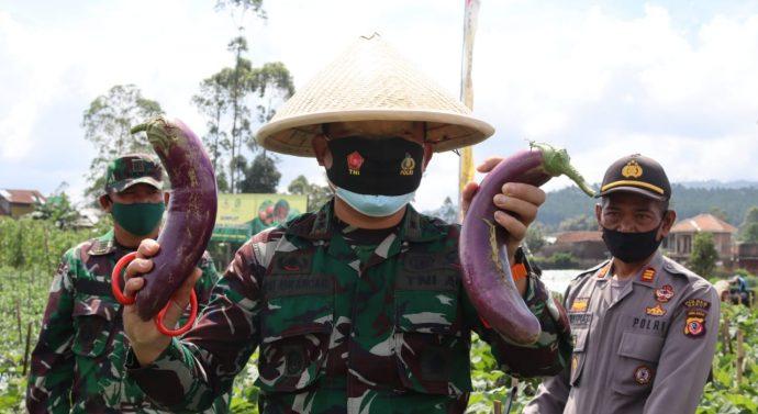 Panen Raya Holtikultura Komoditi (Tomat, cabe dan Terong Ungu) dengan menggunakan Bios 44 DC Kodim 0611 Garut Ta. 2020